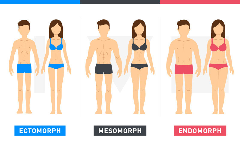 Body Types Illustration